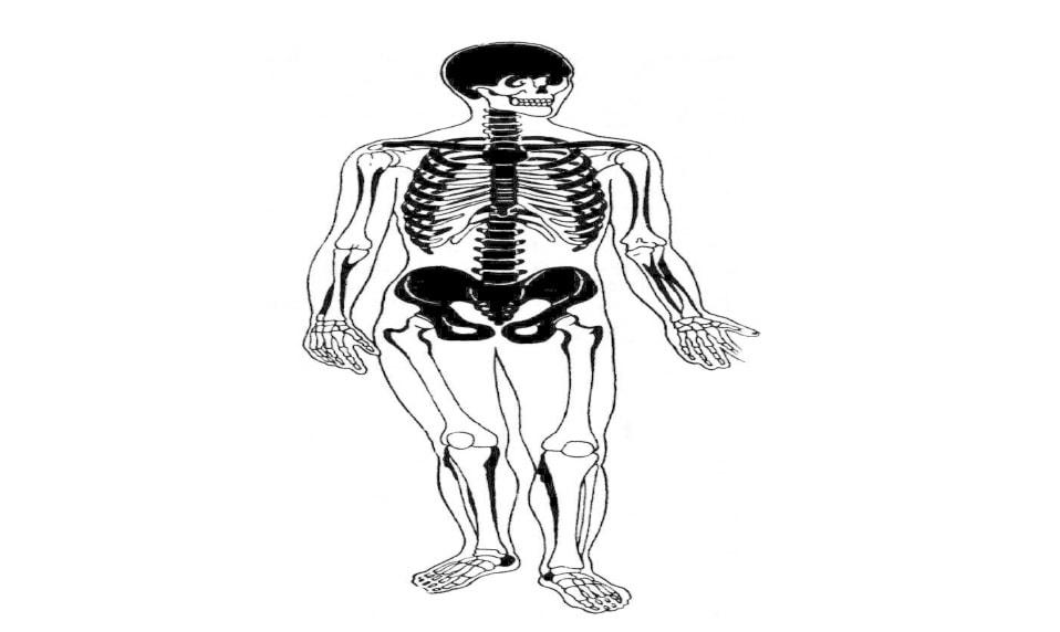 скелет при флюорозе