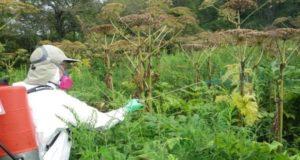 протравка растений